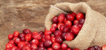 Впервые в лесах Поморья будут создавать ягодные плантации