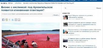 Бизнес с кислинкой: под Архангельском появится клюквенная плантация?