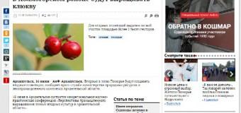 В Холмогорском районе будут выращивать клюкву