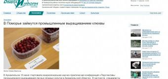 В Поморье займутся промышленным выращиванием клюквы