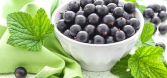 Промышленное выращивание ягод в России становится все более популярным