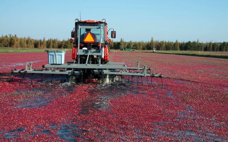buyers-growers-main-harvest-1
