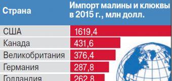 """Статья в АиФ: """"Ягодный бум. Как России разбогатеть на малине и клюкве?"""""""
