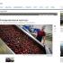 Замороженная выгода: как «Вологодская ягода» выбирается из кризиса
